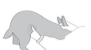Tavşanın Hamile Olduğunu Nasıl Anlarız